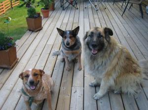 Cody, Dixie and Timber